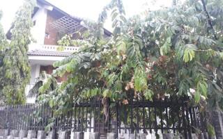 Biệt thự Thảo Điền - Biệt thự đường 60, Thảo Điền